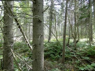 Photo 5: Pictou Landing Road in Pictou Landing: 108-Rural Pictou County Vacant Land for sale (Northern Region)  : MLS®# 202118660