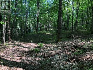 Photo 16: N/A RANEY Road E in Sundridge: Vacant Land for sale : MLS®# 40129602