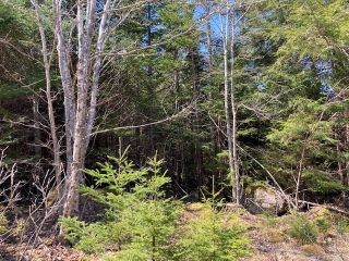 Photo 4: 65 Eaglet Lane in Musquodoboit Harbour: 35-Halifax County East Vacant Land for sale (Halifax-Dartmouth)  : MLS®# 202109854