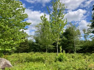 Photo 16: Lot 29 Anderson Drive in Sherbrooke: 303-Guysborough County Vacant Land for sale (Highland Region)  : MLS®# 202115631