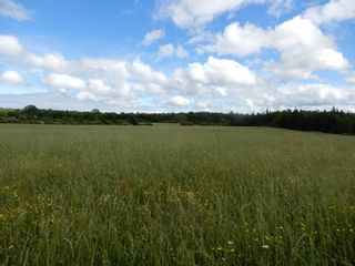 Photo 5: Lot 17 Second Division Road in Heathbell: 108-Rural Pictou County Vacant Land for sale (Northern Region)  : MLS®# 202116209