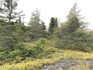 Photo 7: 0 Main Street in Embree: Vacant Land for sale : MLS®# 1229550