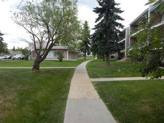 Photo 44:  in Edmonton: Zone 29 Condo for sale : MLS®# E4248069