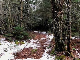 Photo 12: LOT 100ABC WEST PETPESWICK Road in West Petpeswick: 35-Halifax County East Vacant Land for sale (Halifax-Dartmouth)  : MLS®# 5158270