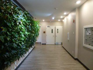 Photo 5: 305 10006 83 Avenue in Edmonton: Zone 15 Condo for sale : MLS®# E4255743
