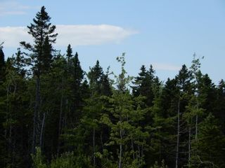 Photo 10: Battist Road in Sundridge: 108-Rural Pictou County Vacant Land for sale (Northern Region)  : MLS®# 202119320