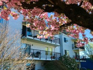"""Photo 6: 101 46033 CHILLIWACK CENTRAL Road in Chilliwack: Chilliwack E Young-Yale Condo for sale in """"HAZELDENE"""" : MLS®# R2571076"""