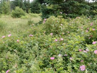 Photo 4: 299 New Lairg Road in New Lairg: 108-Rural Pictou County Vacant Land for sale (Northern Region)  : MLS®# 202117815