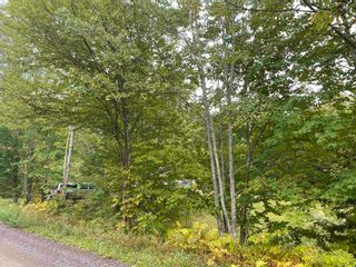 Photo 6: 1005 Heathbell Road in Scotch Hill: 108-Rural Pictou County Vacant Land for sale (Northern Region)  : MLS®# 202124669