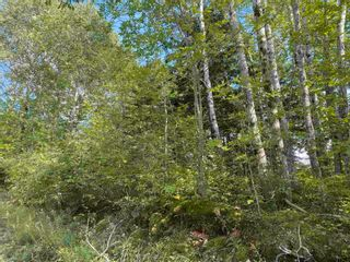 Photo 3: Lot Manse Road in Kenzieville: 108-Rural Pictou County Vacant Land for sale (Northern Region)  : MLS®# 202122852