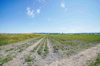 Photo 17: 16397 40 Avenue in Surrey: Serpentine Agri-Business for sale (Cloverdale)  : MLS®# C8038664
