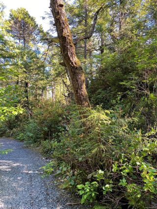 Photo 9: 851 Lorne White Pl in : PA Ucluelet Land for sale (Port Alberni)  : MLS®# 878308