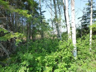 Photo 3: 1 Rural Address in Barrier Valley: Lot/Land for sale (Barrier Valley Rm No. 397)  : MLS®# SK861319