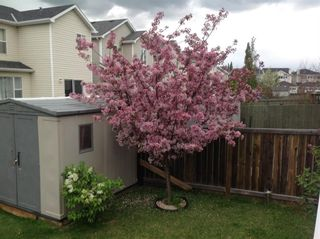 Photo 23: 103 Royal Elm Way NW in Calgary: Royal Oak Detached for sale : MLS®# A1111867