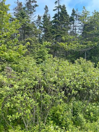 Photo 3: Lot 20 Ketch Harbour Road in Ketch Harbour: 9-Harrietsfield, Sambr And Halibut Bay Vacant Land for sale (Halifax-Dartmouth)  : MLS®# 202116566