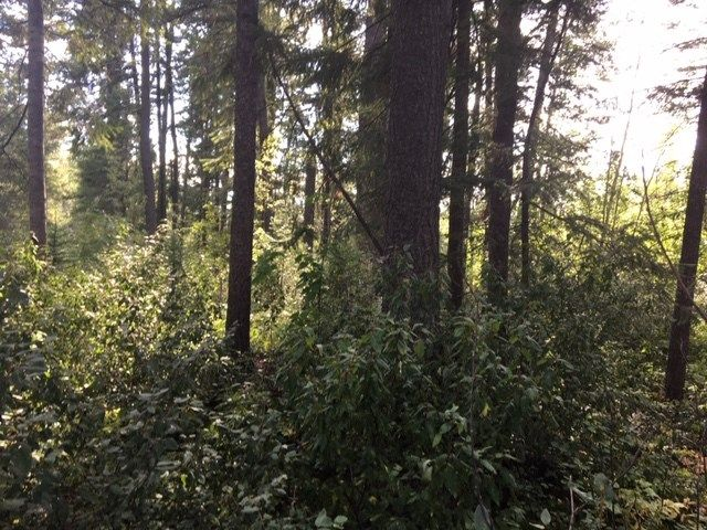 Photo 2: Photos: LOT 4 VALHALLA Road in Quesnel: Quesnel - Town Land for sale (Quesnel (Zone 28))  : MLS®# R2491850