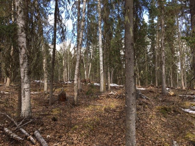 Photo 7: Photos: LOT 1 MARSH Road in Quesnel: Quesnel - Rural West Land for sale (Quesnel (Zone 28))  : MLS®# R2560822