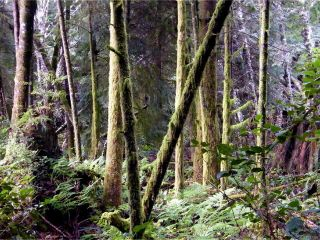 Photo 41: 1230 Pacific Rim Hwy in TOFINO: PA Tofino House for sale (Port Alberni)  : MLS®# 837426