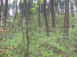 Photo 6: 7908 Alpine Road, in Vernon: Vacant Land for sale : MLS®# 10240275