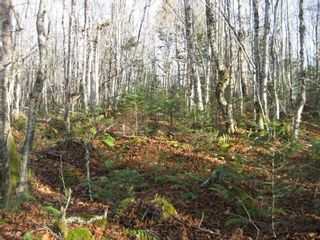 Photo 8: Lot Highway 107 in West Petpeswick: 35-Halifax County East Vacant Land for sale (Halifax-Dartmouth)  : MLS®# 202114068