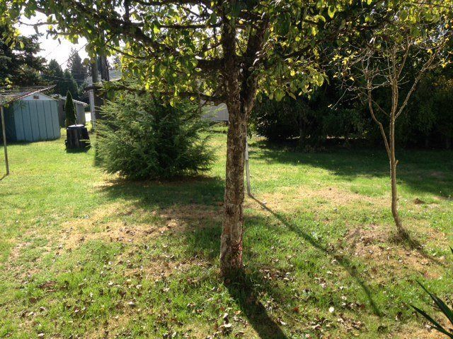 """Photo 3: Photos: 4 12868 229 Street in Maple Ridge: East Central Manufactured Home for sale in """"ALOUETTE RETIREMENT MOBILE HOME"""" : MLS®# R2212322"""