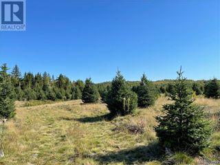 Photo 25: - Saint David Ridge in St. Stephen: Vacant Land for sale : MLS®# NB063465