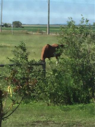 Photo 27: 262 Range Road in Rural Willow Creek No. 26, M.D. of: Rural Willow Creek M.D. Detached for sale : MLS®# A1012725