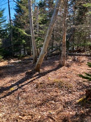 Photo 4: 33 Bruce Drive in Ship Harbour: 35-Halifax County East Vacant Land for sale (Halifax-Dartmouth)  : MLS®# 202110751