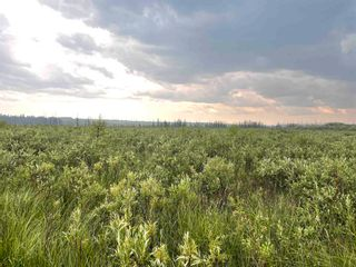 Photo 13: Twp 604 Rg Rd 244: Rural Westlock County Rural Land/Vacant Lot for sale : MLS®# E4223747