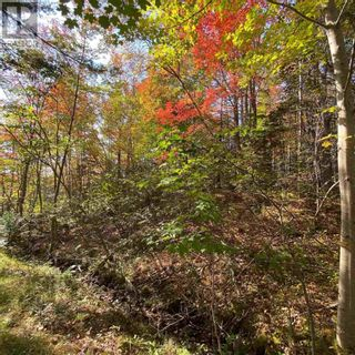 Photo 9: Acreage Middle New Cornwall in Middle New Cornwall: Vacant Land for sale : MLS®# 202125307