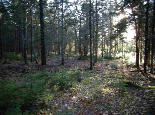 Photo 10: Hwy 3 Tusket Highway in Tusket: County Tusket- Hwy 308 Vacant Land for sale (Yarmouth)  : MLS®# 201726173