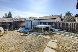Photo 30: 20 Castleridge Close NE in Calgary: Castleridge Detached for sale : MLS®# A1113165