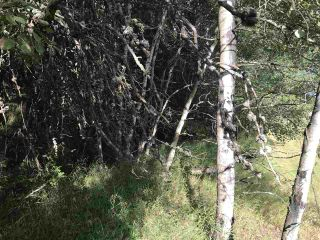 Photo 12: Pinebrook Block 1 Lot 2: Rural Thorhild County Rural Land/Vacant Lot for sale : MLS®# E4171871