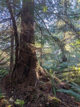 Photo 24: LT 189 Ellenor Rd in : CV Comox Peninsula Land for sale (Comox Valley)  : MLS®# 858998