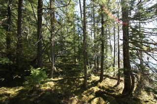 Photo 7: Lot 2 Bradley Road: Seymour Arm Land Only for sale (Shuswap)