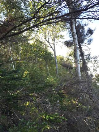 Photo 9: Lots 07-3, 07-1 Highway 223 in Beaver Cove: 207-C. B. County Vacant Land for sale (Cape Breton)  : MLS®# 202117200