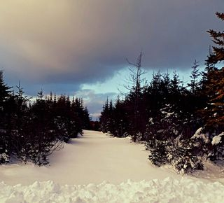 Photo 3: 0 Louisbourg Highway in Louisbourg: 207-C. B. County Vacant Land for sale (Cape Breton)  : MLS®# 202102405