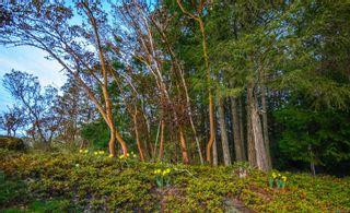 Photo 55: 236 Stevens Rd in : SW Prospect Lake House for sale (Saanich West)  : MLS®# 871772