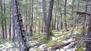 Photo 16: Lot B Mt. Matheson Rd in : Sk East Sooke Land for sale (Sooke)  : MLS®# 866391