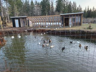 Photo 14: 2056 Spike Rd in : CV Merville Black Creek House for sale (Comox Valley)  : MLS®# 867054