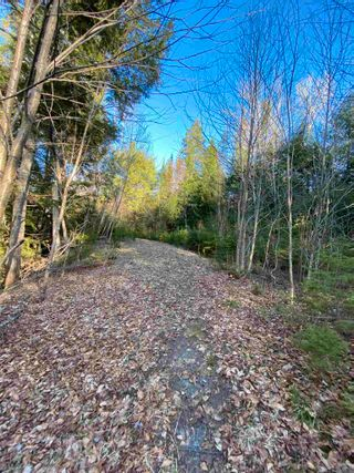 Photo 19: Saunders Road in Durham: 108-Rural Pictou County Vacant Land for sale (Northern Region)  : MLS®# 202108674