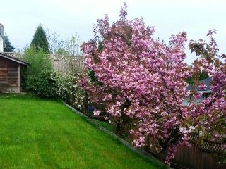 """Photo 16: 31056 KINGFISHER Drive in Abbotsford: Abbotsford West House for sale in """"TOWNLINE HILL"""" : MLS®# F1428278"""