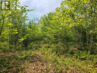 Photo 9: Lot 101 Dorey Mills Road in Clearland: Vacant Land for sale : MLS®# 202119645