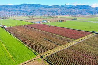 Photo 3: 4081 DIXON Road: Agri-Business for sale in Abbotsford: MLS®# C8035569