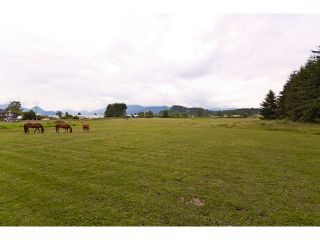 Photo 32: 15146 HARRIS Road in Pitt Meadows: North Meadows House for sale : MLS®# V899524