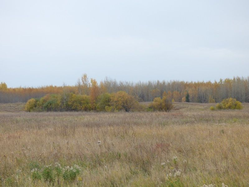 Photo 19: Photos: N1/2 SE19-57-1-W5: Rural Barrhead County Rural Land/Vacant Lot for sale : MLS®# E4217154