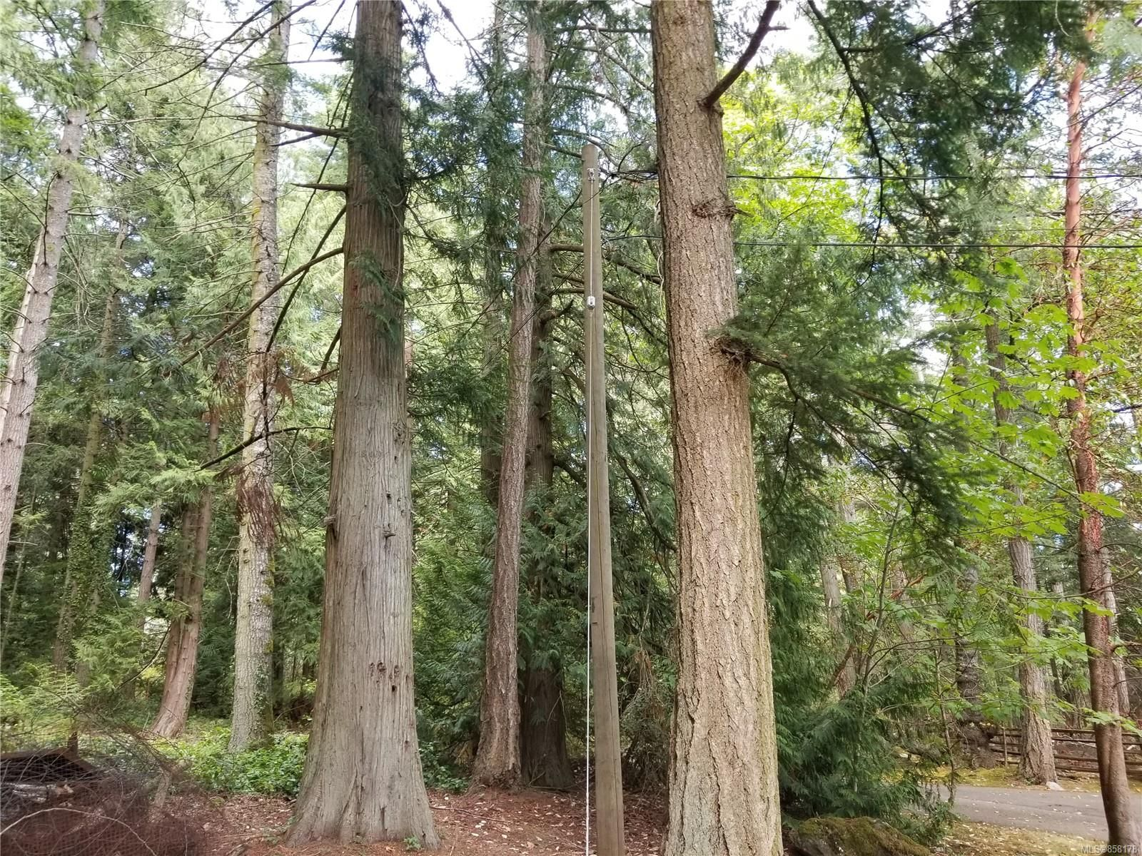 Main Photo: Lot 1 Inverness Rd in : NS Ardmore Land for sale (North Saanich)  : MLS®# 858178