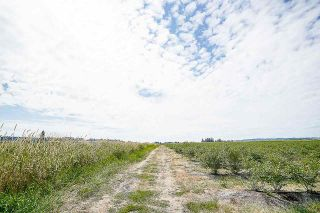 Photo 4: 16397 40 Avenue in Surrey: Serpentine Land for sale (Cloverdale)  : MLS®# R2586709