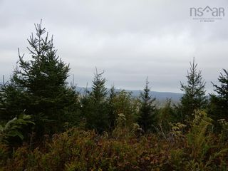 Photo 4: Tanner Hill Road in Limerock: 108-Rural Pictou County Vacant Land for sale (Northern Region)  : MLS®# 202121301