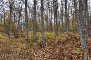 Photo 11: #9 North Pigeon Lake Estates: Rural Wetaskiwin County Rural Land/Vacant Lot for sale : MLS®# E4265016